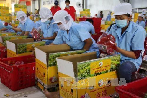 Biểu thuế xuất khẩu ưu đãi thực hiện Hiệp định EVFTA
