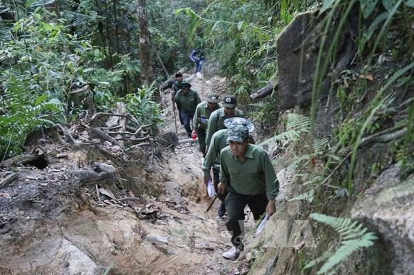 Áp lực trong quản lý, bảo vệ rừng