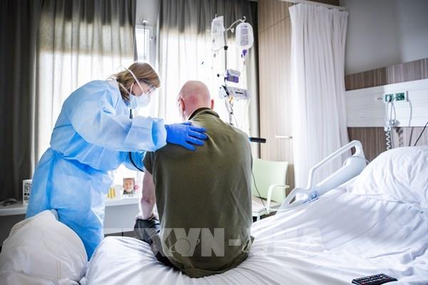 Hà Lan có thêm bệnh nhân nhiễm virus SARS-CoV-2 từ chồn
