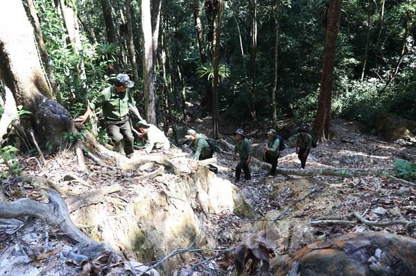 """Bài 1 - Những chuyển biến tích cực sau lệnh """"đóng cửa rừng"""" của Thủ tướng """