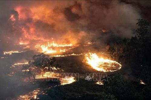Australia: Khói từ thảm họa cháy rừng khiến nhiều người nhập viện vì bệnh tim phổi