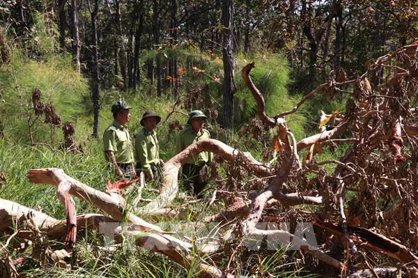 Áp lực giữ rừng ở Tây Nguyên: Bài 2 – Dễ đóng cửa, khó cài then