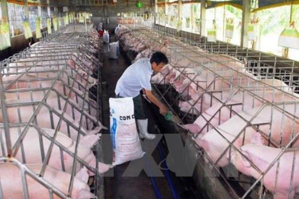 Kêu gọi doanh nghiệp chăn nuôi cùng chung tay bình ổn giá thịt lợn