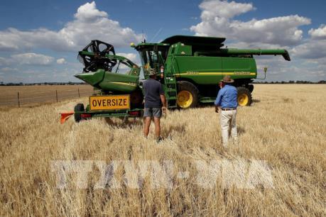 Tiền lệ nào cho việc Trung Quốc áp dụng thuế bán phá giá đối với lúa mạch Australia?