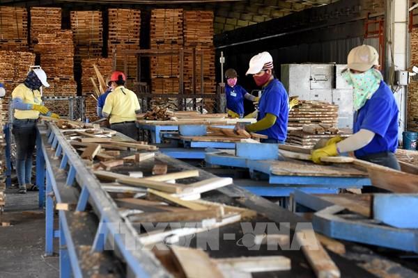 Xuất khẩu dăm gỗ gặp khó