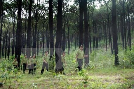 Tạo nguồn nguyên liệu gỗ - Bài 1: Lợi ích kép từ rừng gỗ lớn