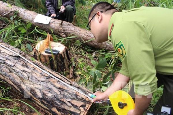 Áp lực giữ rừng ở Tây Nguyên: Bài cuối - Phát triển rừng bền vững