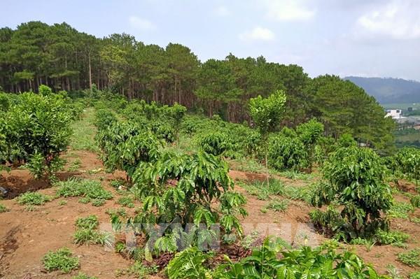"""Hàng trăm ha rừng ở Lâm Đồng """"biến mất"""" do quản lý lỏng lẻo"""