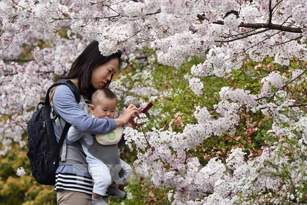 Các điểm du lịch của Nhật Bản đón khách trở lại