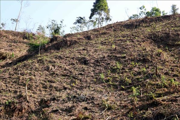 Xác minh vụ phá rừng phòng hộ ở Tuyên Quang theo phản ánh của TTXVN