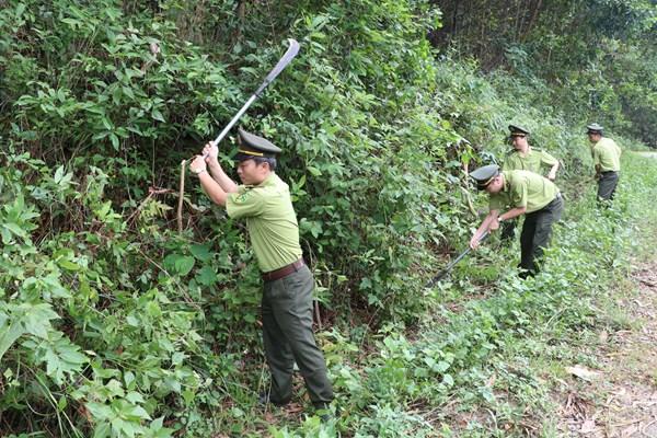 Các phương án phòng chống cháy rừng mùa nắng nóng
