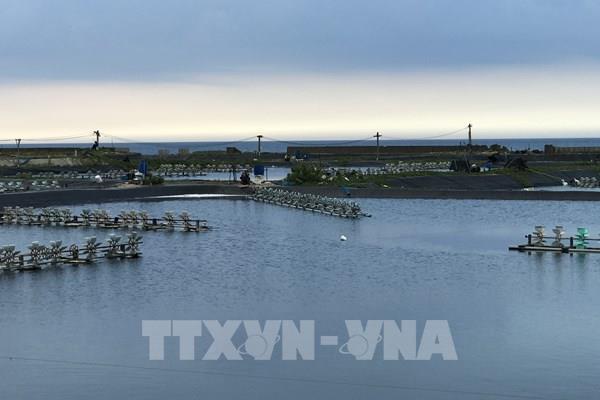 Phú Yên: Dịch bệnh trên tôm nuôi nước lợ có chiều hướng gia tăng