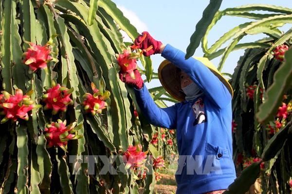 Hiệp định EVFTA: Nông sản Việt hưởng lợi gì tại thị trường châu Âu?
