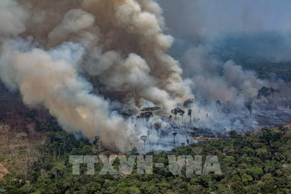 Báo động cháy rừng ở Brazil