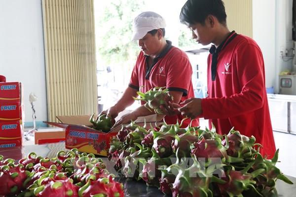 Trái cây Việt Nam sẽ rút ngắn thời gian xuất khẩu sang Trung Quốc