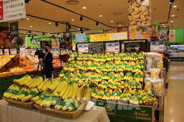 Chuối Việt Nam vào chuỗi siêu thị Lotte Hàn Quốc