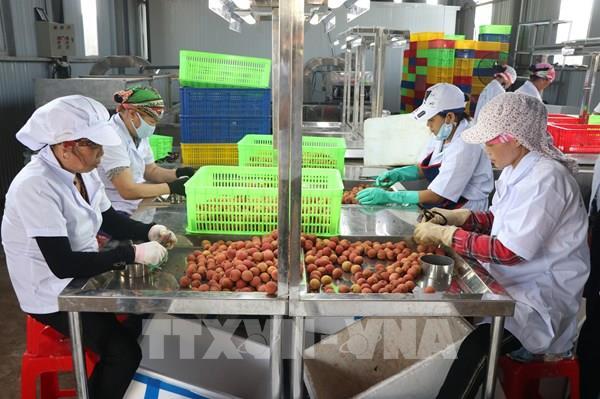 Vina T&T Group khôi phục xuất khẩu rau quả sau COVID-19