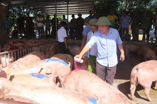 Lợn Thái Lan nhập về được bán hết ngay với giá 90.000 đồng/kg hơi