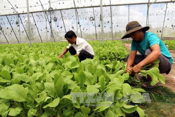 Campuchia sẽ ký MoU với doanh nghiệp Nhật Bản phát triển rau an toàn