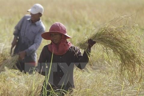 WB thông qua 93 triệu USD hỗ trợ chương trình cấp đất ở Campuchia