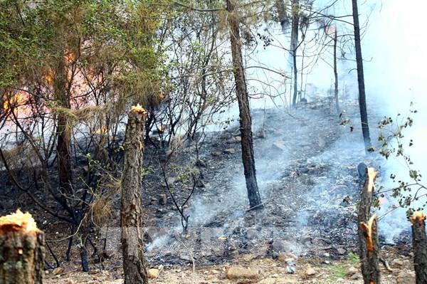 Hàng loạt vụ cháy rừng tại khu vực miền Trung