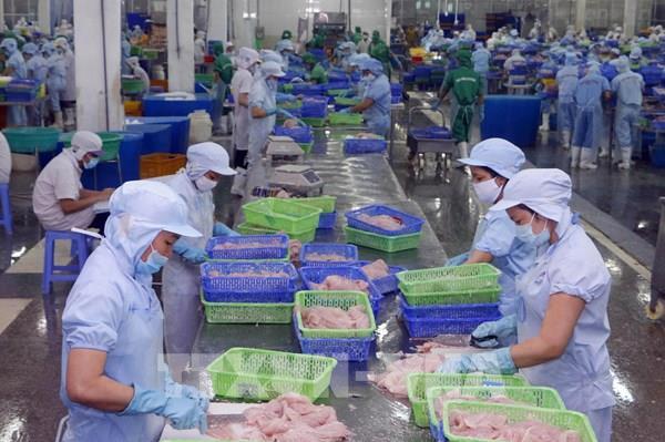 Đưa cá tra vào Mỹ: Xây dựng niềm tin từ uy tín, chất lượng