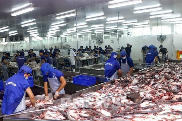 Doanh nghiệp thủy sản đề xuất tháo gỡ vướng mắc về chính sách