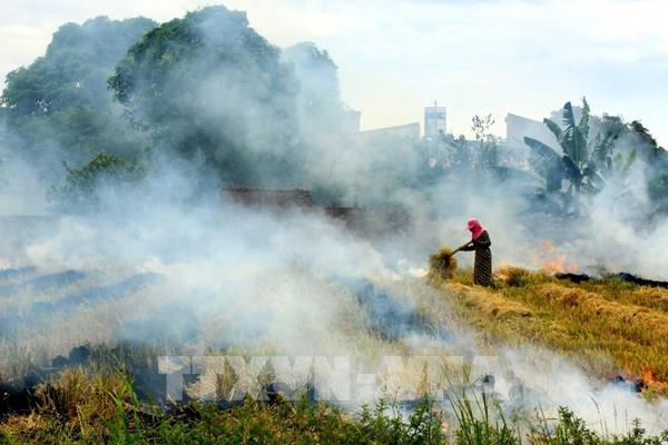 """Mục tiêu """"Thành phố không đốt rơm rạ"""" của Hà Nội chưa thành hiện thực"""