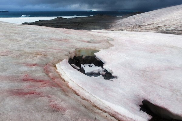 Xuất hiện băng tuyết hồng trên dãy Alps