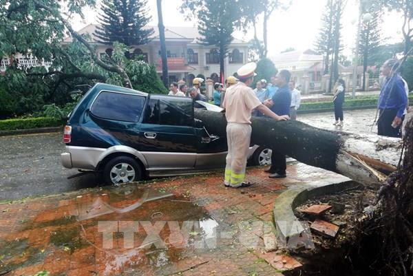 Lâm Đồng: Mưa lớn, gió giật đổ cây, đè bẹp xe ô tô đậu trên đường