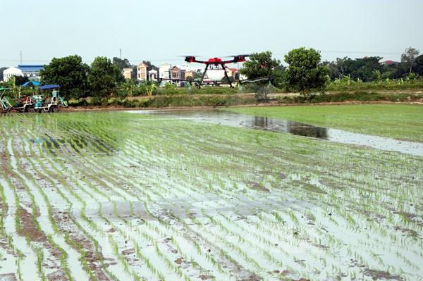 Hải Dương trình diễn cấy máy và phun thuốc bảo vệ thực vật bằng máy bay không người lái