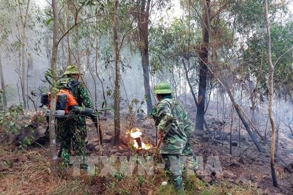 Cháy rừng tại huyện Diễn Châu, Nghệ An