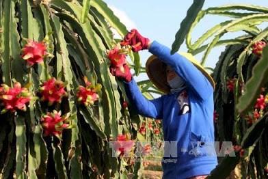An Giang ký hợp tác đầu tư phát triển vùng cây ăn trái phục vụ xuất khẩu