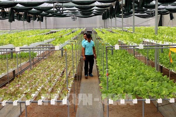 Đa dạng hóa hình thức đầu tư, xây dựng vùng nông nghiệp công nghệ cao