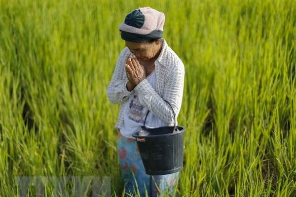 """Thái Lan đưa 13 loại thảo dược và giống cây sử dụng làm """"thuốc trừ sâu xanh"""""""