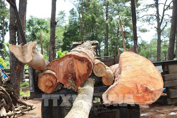 Kon Tum: Ngăn chặn kịp thời vụ phá rừng nguyên sinh tại huyện Kon Plông