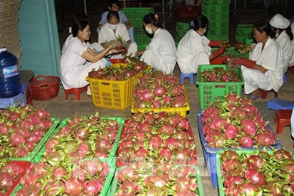 Malaysia – Thị trường xuất khẩu tiềm năng của doanh nghiệp Việt