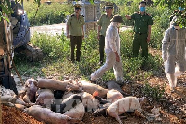 Ngăn chặn kịp thời vụ vận chuyển lợn bị dịch tả châu Phi về Bắc Giang tiêu thụ