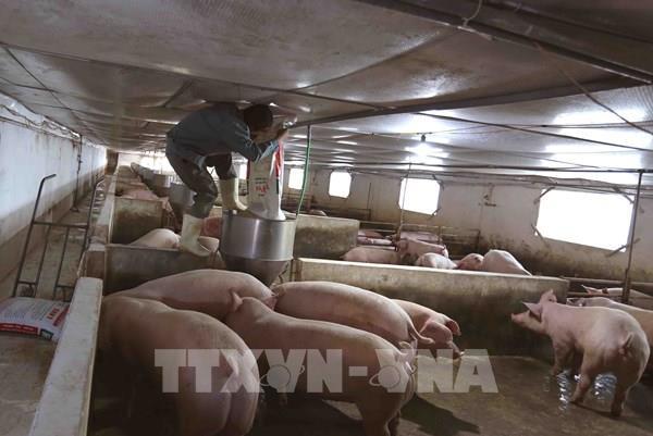 Đẩy mạnh xã hội hóa đầu tư cho chăn nuôi