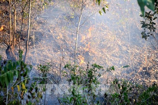 Hơn 1 ngày đêm khống chế vụ cháy rừng tại núi Hầm Vàng – Đà Nẵng