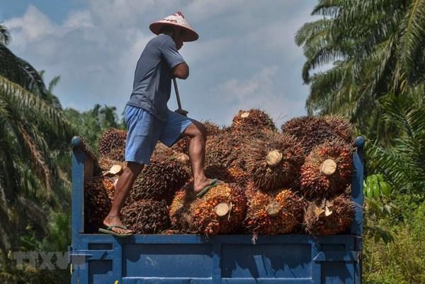 Malaysia tuyên bố sẽ khiếu nại lên WTO về lệnh hạn chế dầu cọ của EU