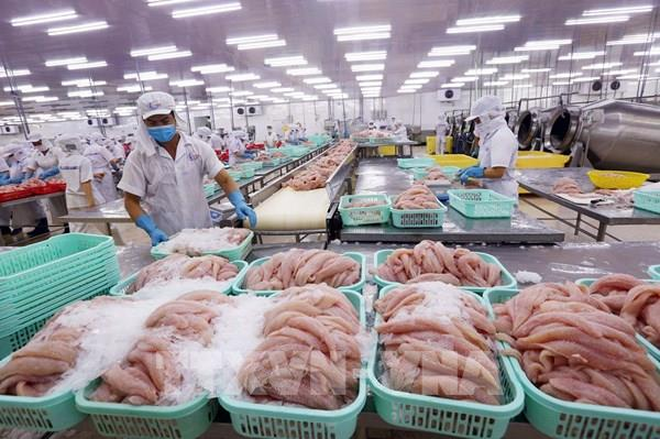 """Cá tra Việt tìm """"đường bơi"""" ở thị trường trong nước"""