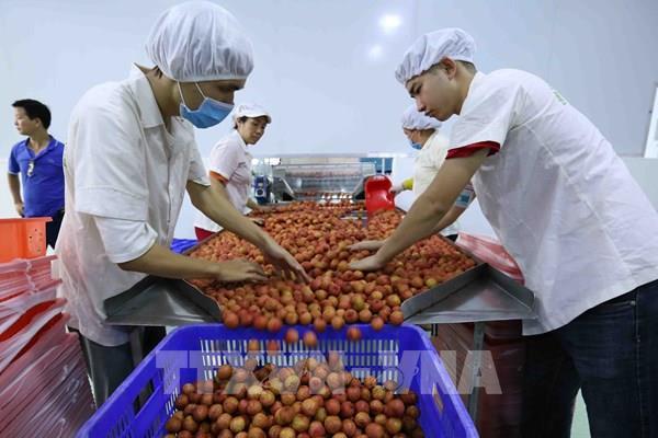 Xuất khẩu nông sản Việt – Bài 1: Dấu chân trên bản đồ thế giới