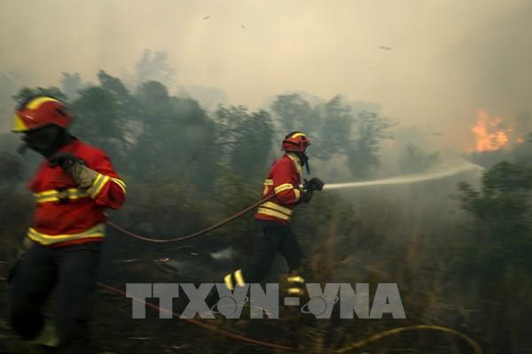 700 lính cứu hỏa nỗ lực ngăn cháy rừng lan rộng ở Bồ Đào Nha