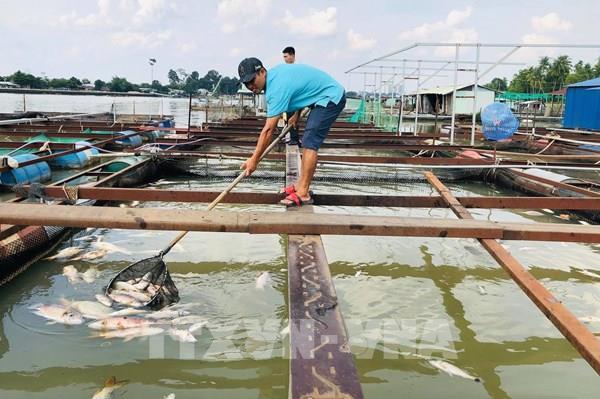 Cá bè chết hàng loạt trên sông Đồng Nai