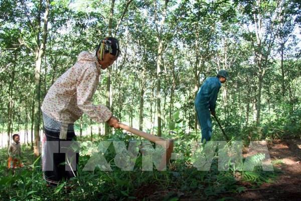 Bình Phước đề xuất quy hoạch 70.000 ha đất phục vụ phát triển công nghiệp