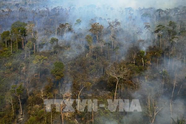 """Sáng kiến bảo vệ rừng Amazon - """"lá phổi của Trái Đất"""""""