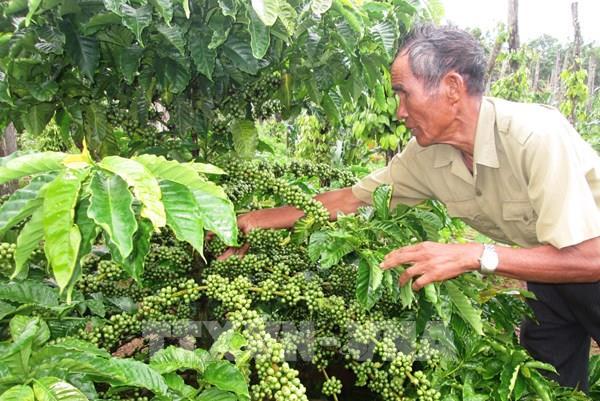 """Cà phê Việt vào chuỗi thương hiệu  - Bài 2: Nhập cuộc của những """"ông lớn"""""""