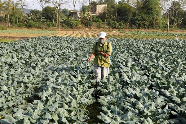 Bao tiêu sản phẩm giúp người dân thoát nghèo nơi vùng cao biên giới