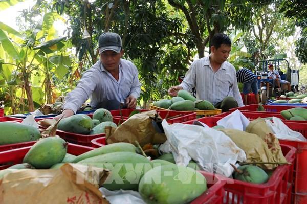 Giám sát chặt mã số vùng trồng nông sản đã cấp